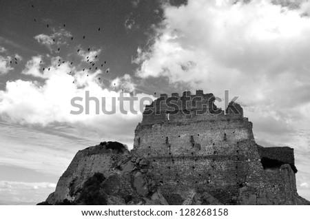 Birds of the Castle of Acquafredda. Sardinia. Italy. B&W - stock photo