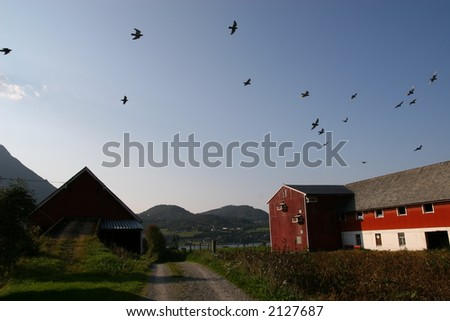 Birds of the farm land - stock photo