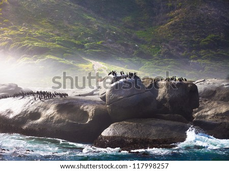 Birds on a rock, Hout Bay, Cape Town