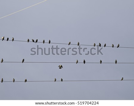 Birds on electric wire with blue sky, free animals