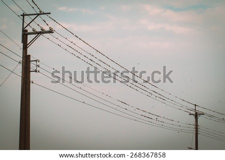 birds on power line cable - stock photo