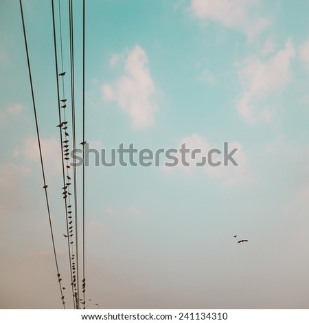 birds on power line cable against blue sky with clouds background vintage retro instagram filter - stock photo