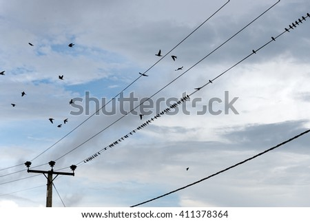 birds on power line - 4 of 4