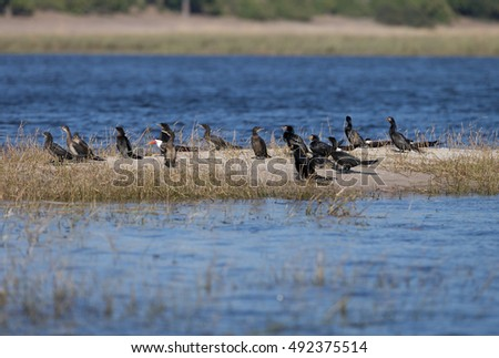 Birds on sand bar in chobe river