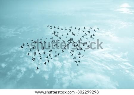 Birds on sky , growth development concept  - stock photo