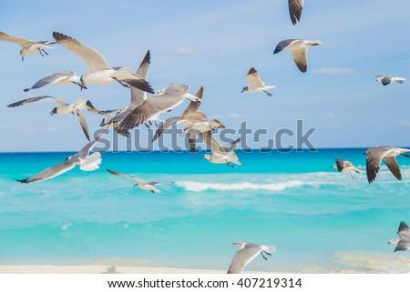 Birds on the beach. Soaring seagull over the ocean - stock photo