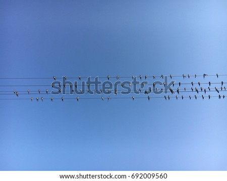 Birds on the electricity pylon