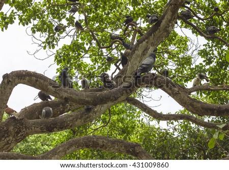 Birds on the Trees - stock photo