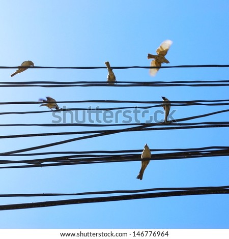 Birds on the wires against blue sky - stock photo