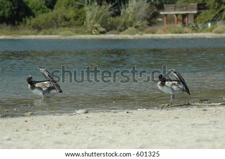 Birds on water - stock photo