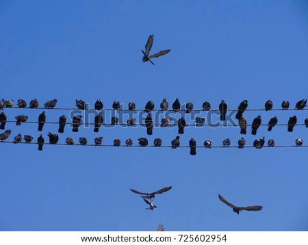 Birds perched on electric cables