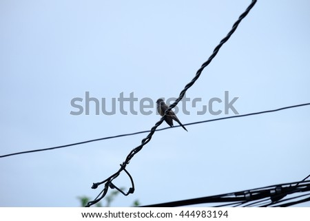 Birds perched on wires. - stock photo