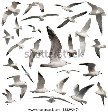 birds set isolated on white - stock photo