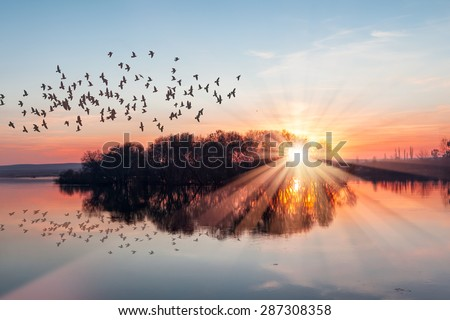 birds silhouettes flying above the lake against sunset - stock photo