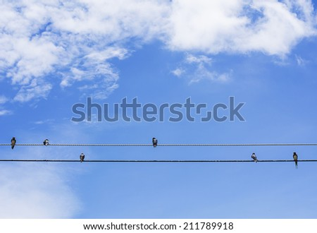 birds  sitting on a wire against blue sky background - stock photo