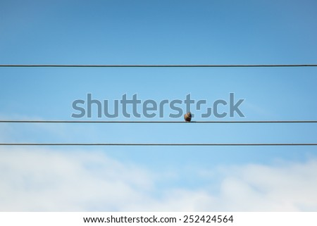 Birds sitting on power lines against the blue sky. - stock photo
