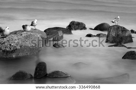 birds standing on the rocks in the ocean in black and white  - stock photo