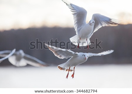 Birds swans sea gulls birds nature trip - stock photo