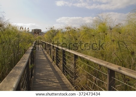 Birds watching bridge in Hula Nature Reserve in north Israel.
