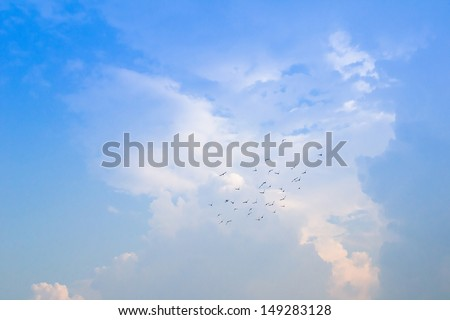 birds with blue sky - stock photo