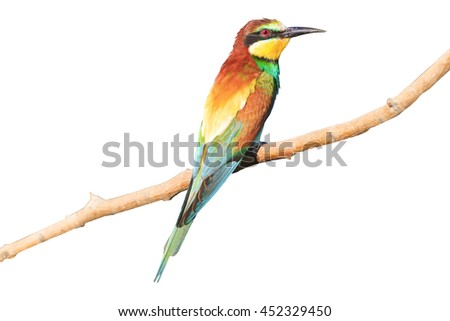 Birdy - rainbow isolated on white - stock photo