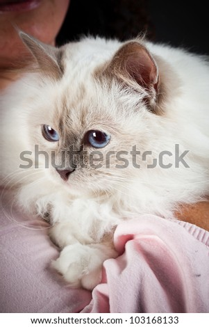 Birman cat isolated on black background. Studio shot.