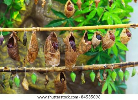 Pasos para hacer Gourd Birdhouses