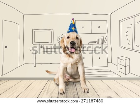 Birthday, adorable, golden. - stock photo