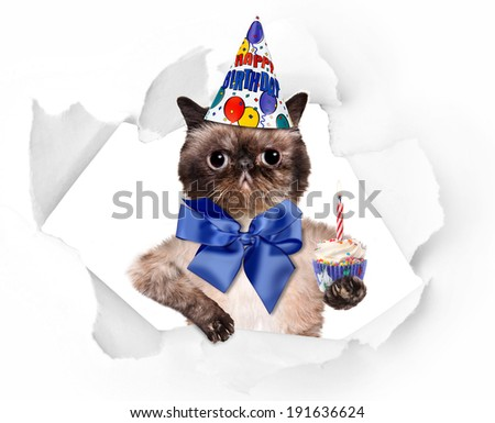 Birthday cat . - stock photo