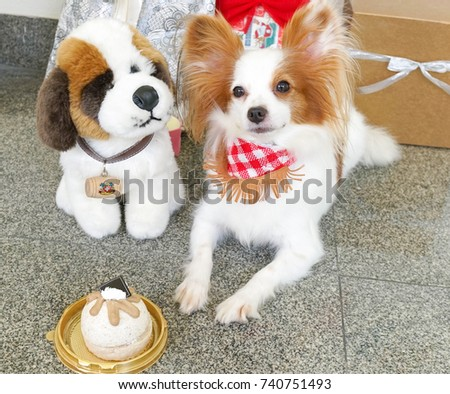 Simple Papillon Canine Adorable Dog - stock-photo-birthday-dog-a-birthday-party-for-a-cute-dog-pure-breed-continental-toy-spaniel-papillon-or-a-740751493  Photograph_358568  .jpg