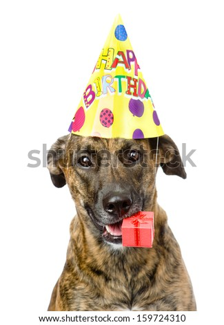 birthday dog with a red box. isolated on white background