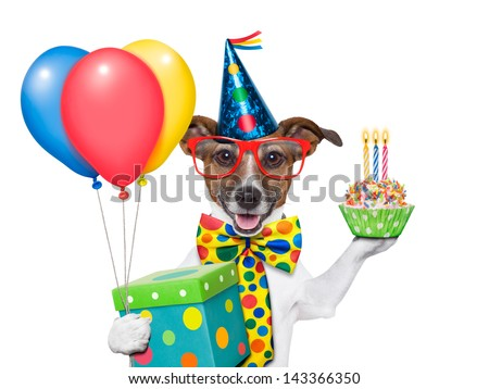 birthday dog with balloons and a cupcake - stock photo