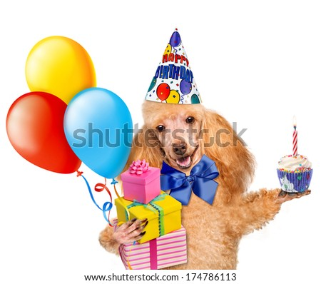 Birthday dog with balloons and a cupcake.