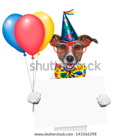 birthday dog with balloons and a white placard - stock photo