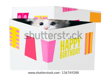 Birthday gift. Kitten peeking through the crack between the lid and the box  isolated on a white background - stock photo