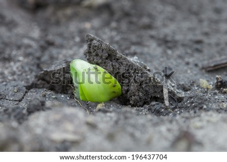 Birthday of a small plant, green sprout in the ground - stock photo