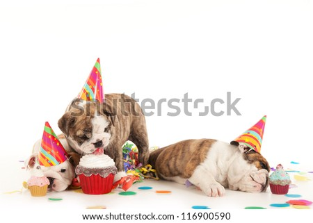 birthday party with bulldog puppies