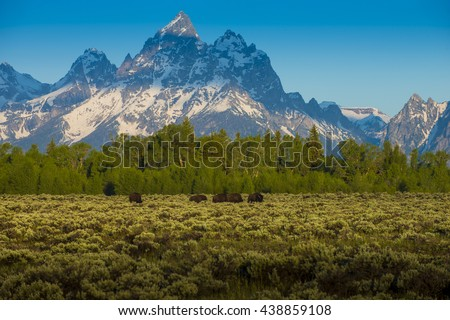 Bison buffalo in foreground of beautiful sheer snow covered mountain peeks against blue sky crisp air natural scenic outdoor western landscape - stock photo