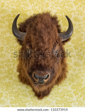 Bison head trophy on the wall of the  Chateau de Mores State Historic Site near Theodore Roosevelt National Park in Medora, North Dakota - stock photo