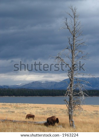 Bison Range - stock photo