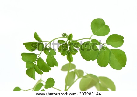 Bitter cucumber-chinese, Moringa (Moringa oleifera Lam.),tree , Vegetables and herbs, medicinal properties.