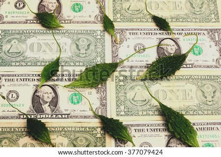 bitter cucumbers on dollar banknotes background