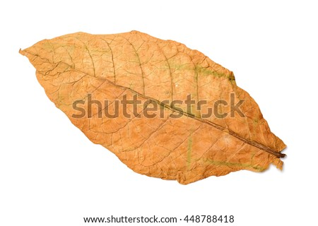 bitter gourd on the white background - stock photo