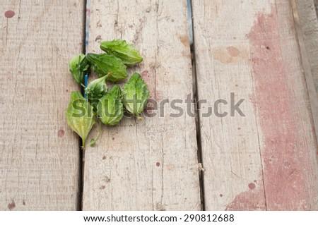 bitter gourd on wooden white background. - stock photo