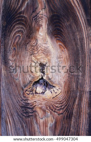 Bizarre knot in wood - rough wooden texture
