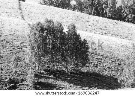 Black ad white mountain landscape with trees