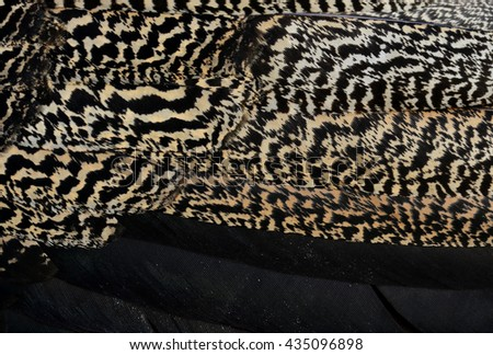Black and brown camouflage texture on Green Peafowl or Indian peacock feathers, the colorful texture of bird feathers - stock photo