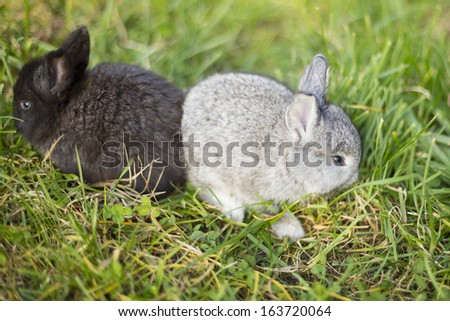 black and grey bunnies in the grass - stock photo