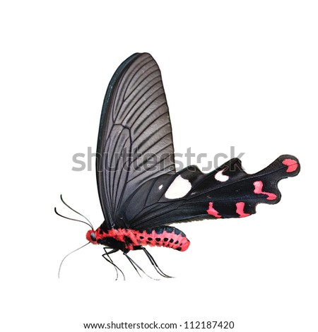 Black and Red Butterfly isolated on white background - stock photo