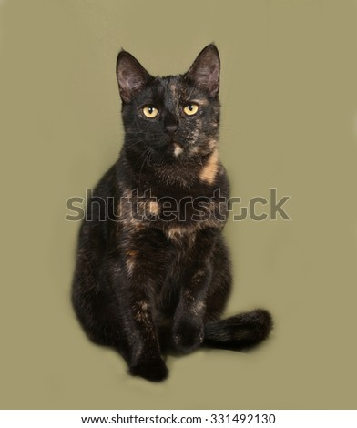 Black and red cat sitting on green background